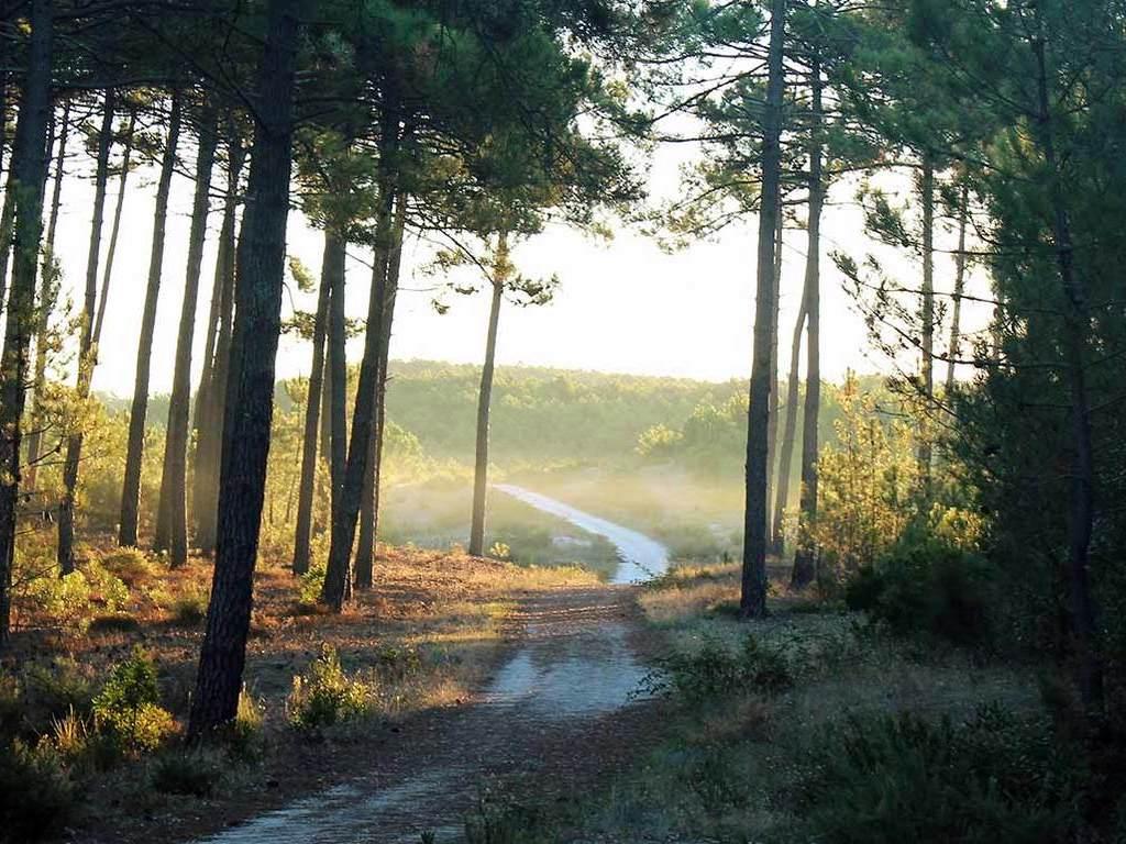 Camping Municipal La Pinede (Les Mées à 10 km)