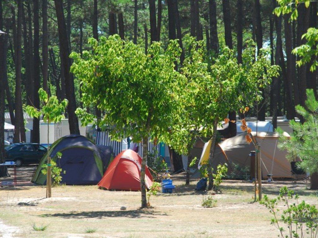 Camping Municipal Les Oyats