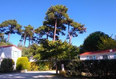 Camping Le Pin Franc (Meschers-sur-Gironde à 5 km)