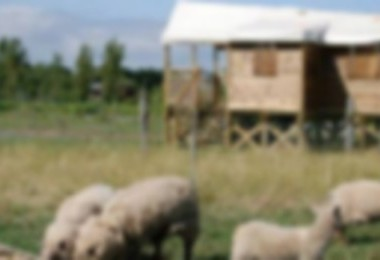 Camping M. Barre Daniel (Saint-Laurent-sur-Sèvre à 6 km)