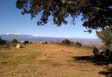 Résidence Le Pic d'Argelès