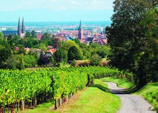 VVF Villages La Plaine d'Alsace